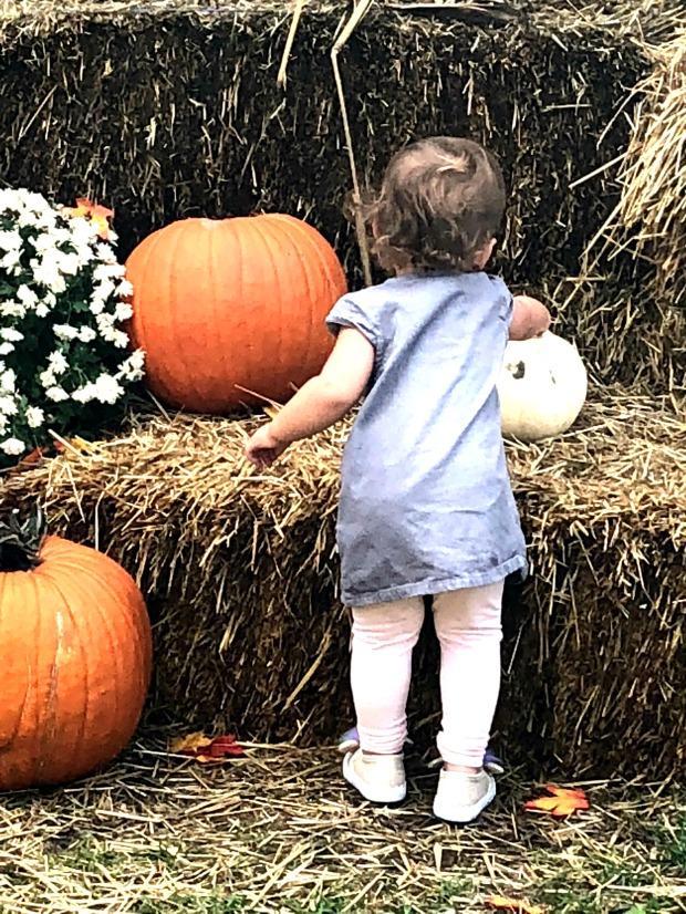 Lulu_Pumpkin